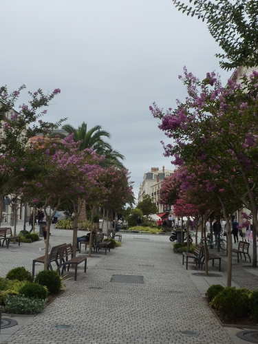 Biarritz, lilas des indes, lagerstroemia